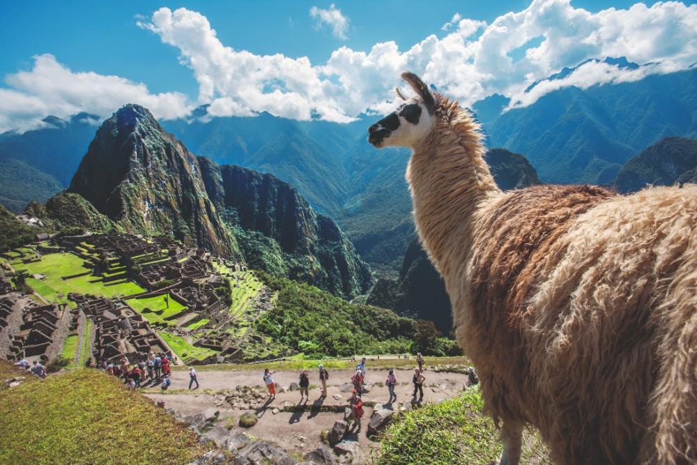 Perú en FITUR, llama en el Macchu Pichu