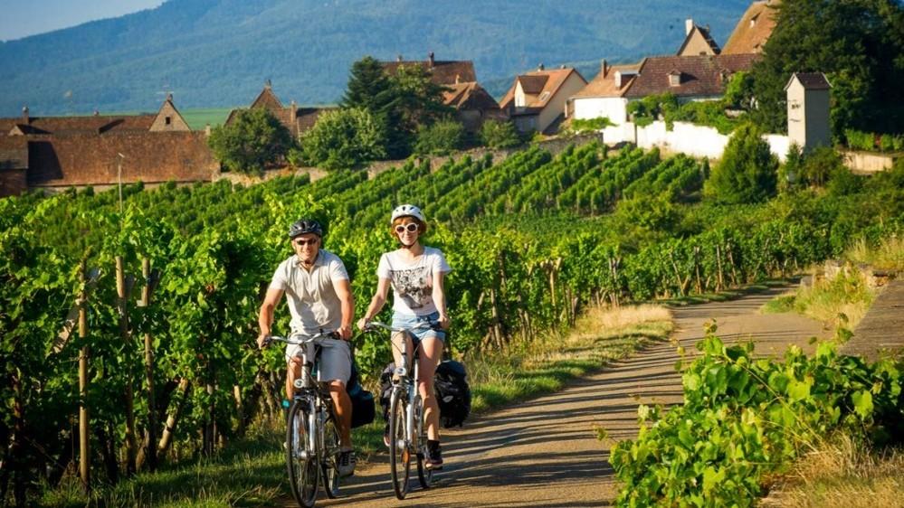 ruta de los viñedos