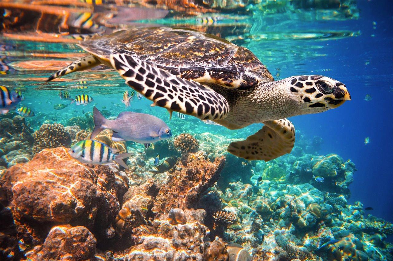 tortugas marinas en Brasil